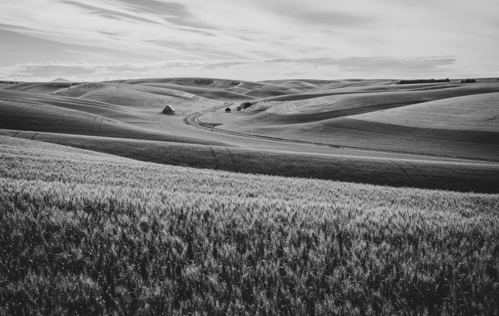 Palouse in B/W